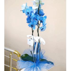 Seramik içerisinde çift dallı mavi orkide ile yaşadığınız her yeri cennete çevirin. Yaşam alanlarına renk katacak olan masmavi orkide saksısıyla uyumlu bir şekilde tek tıkla siparişlerinizi bekliyor. Sevdiklerinizin özel günleri için de internetten veya telefonla orkide siparişlerinizi oluşturabilirsiniz. Zarafeti ve güzelliğiyle görenleri kendine hayran bırakacak güzellikte mavi orkideniz istediğiniz adrese hızlı ve güvenilir bir şekilde ulaştırılır.